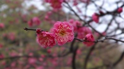 京都御苑05