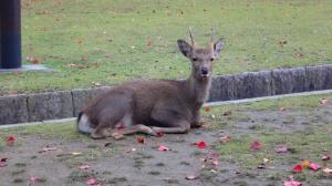 奈良公園38