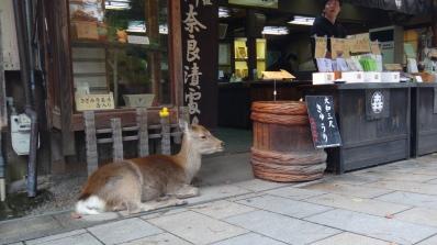 奈良公園_東大寺08