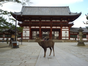 奈良公園_東大寺_中門06