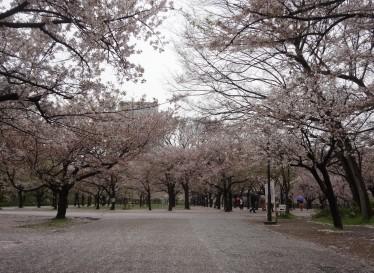 大阪城公園_南外崛11